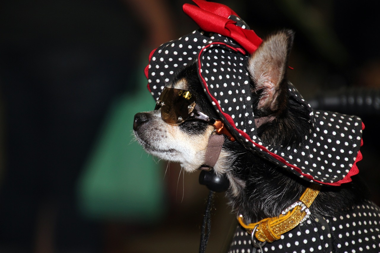 Dressing up Dogs. Is it OK to dress-up my chihuahua?