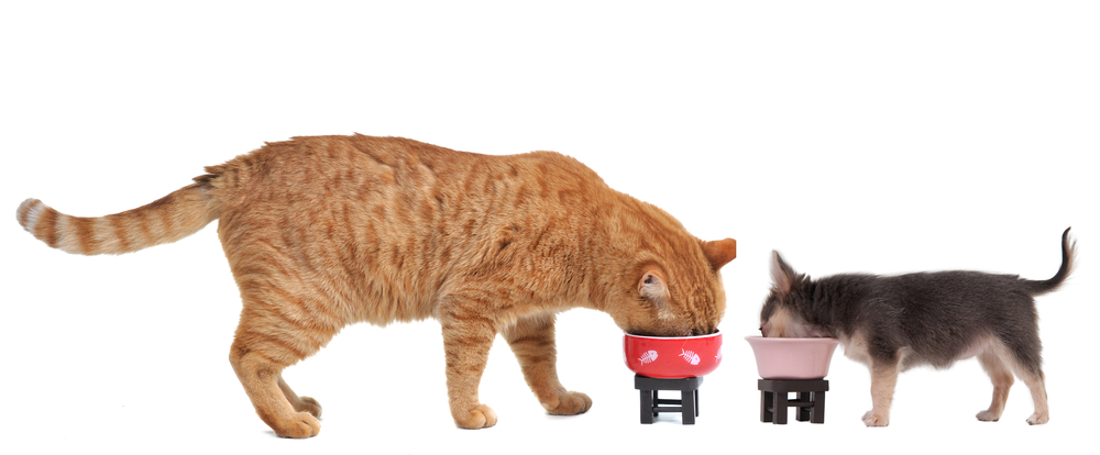 Does it matter if my dog eats cat food?