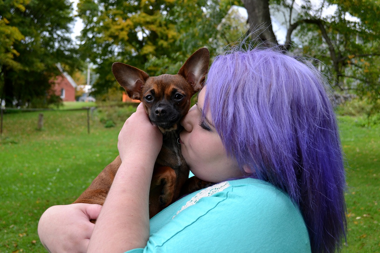 Is picking up your chihuahua making him aggressive?