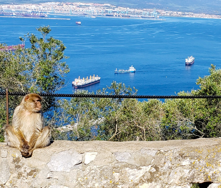 Monkeys and More in Spain, 2019