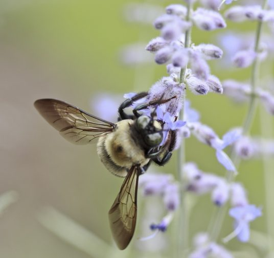 Böcek Alerjileri
