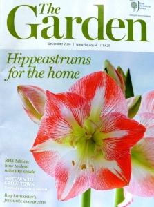 RHS Hippeastrum