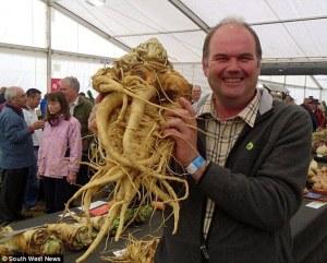 davids big parsnip