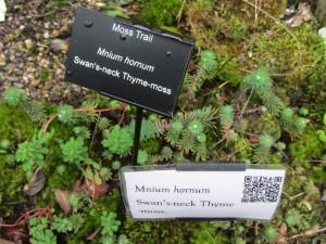 Moss Trail Mnium