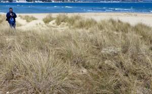 Studland sand dune quadrat
