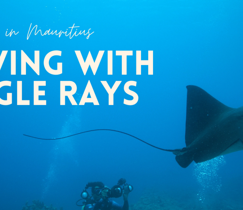 diving with eagle rays in Mauritius