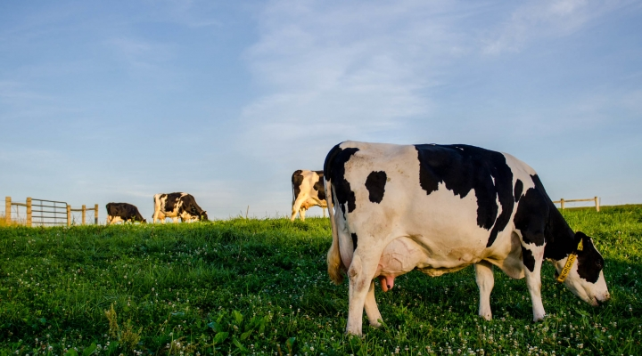 Attend free dairy business planning roundtable meetings