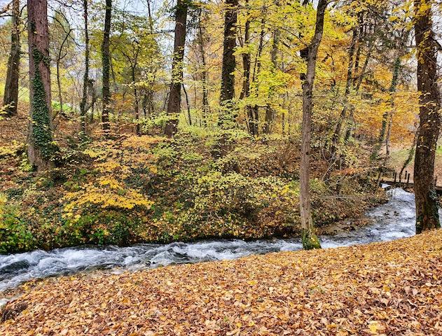 Paysage forêt automne