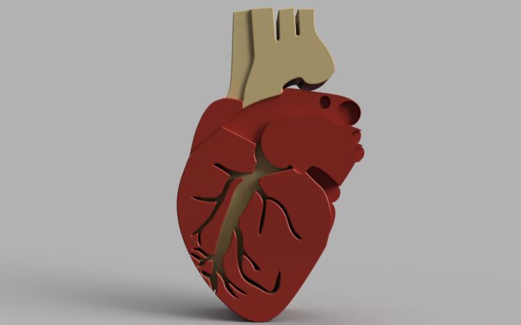 Biology   The Human Heart