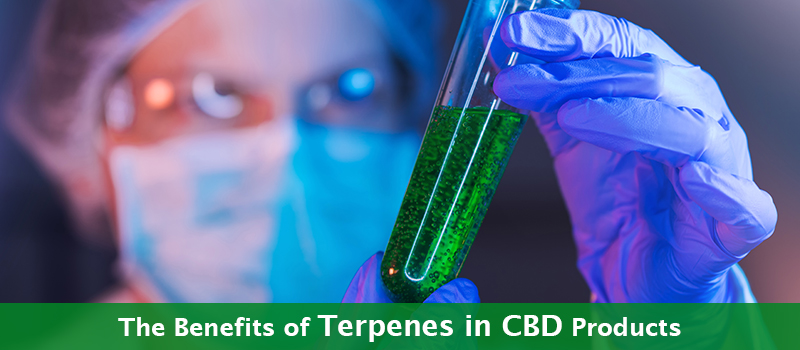 Unraveling the Benefits of Terpenes in CBD Products
