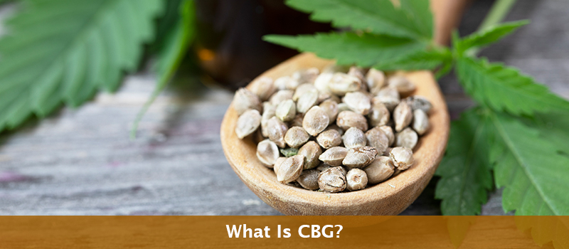 CBG: A Lesser-Known, Extraordinary Cannabinoid