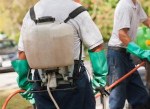 men spraying pesticides