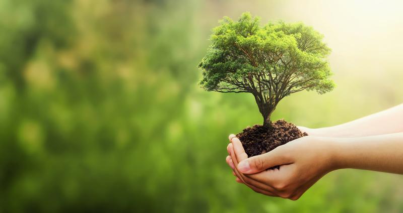 sostenibilidad empresas