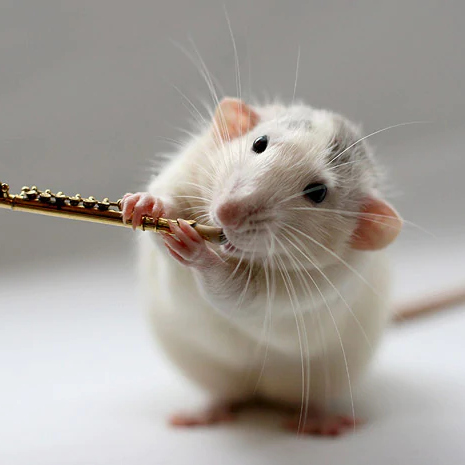 Flute - Mouse playing the flute