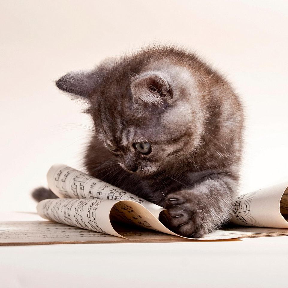 Music Theory - Kitten reading music