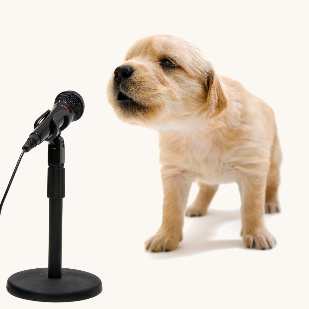 Singing - Puppy & Microphone
