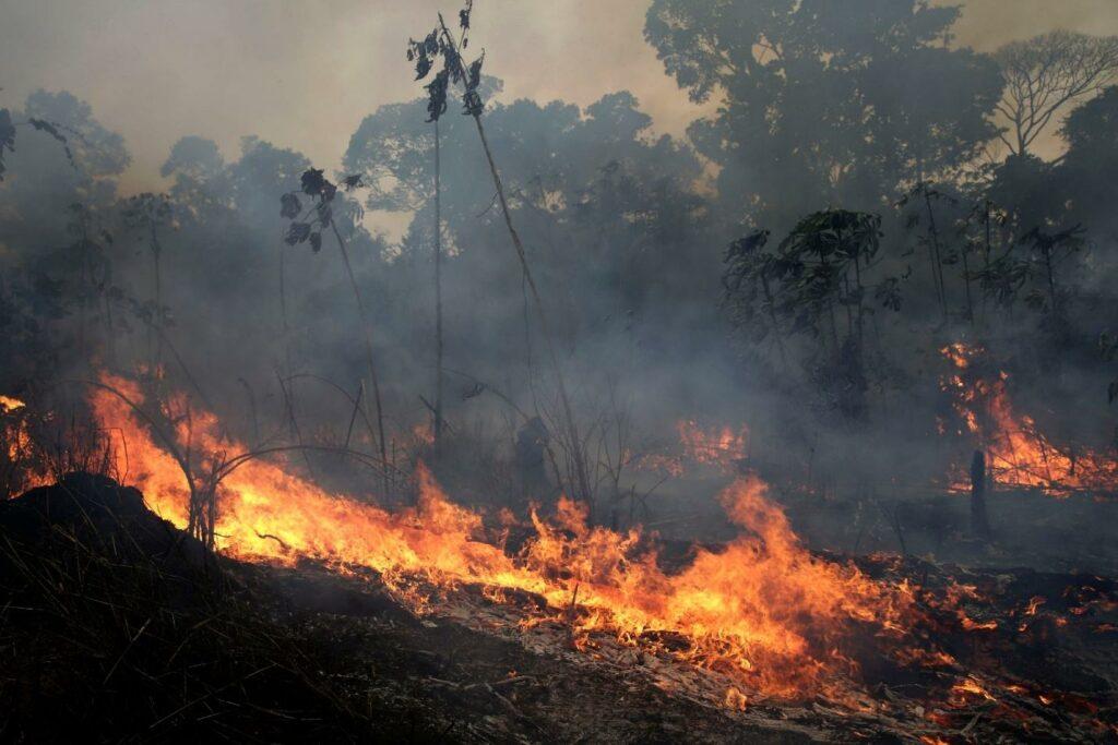 Amazon forest fire devastation