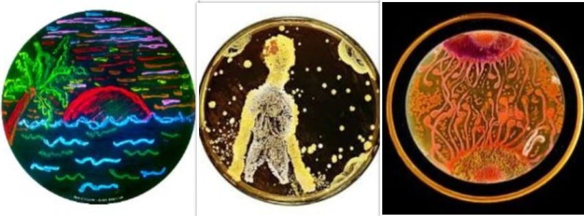 Taking agar art to the next level, successful attempts are made to create detailed portraits and sceneries.