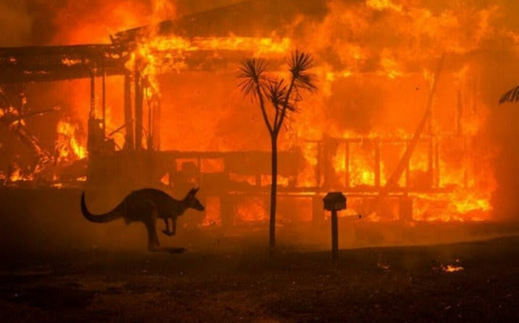A kangaroo hopping in front of a fire