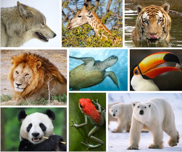 From rising sea levels to wildfires, wildlife is at high risk more than ever