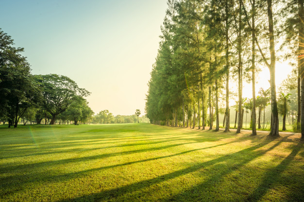 greenery can have good effect on health