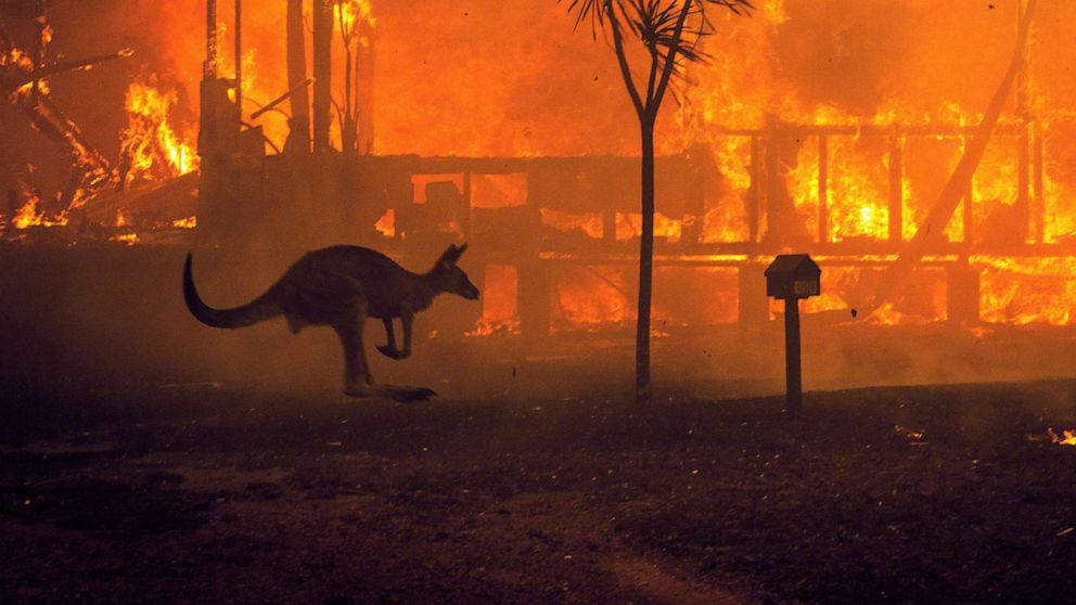 The devastating wildfires in the iconic continent of Australia have been raging since September 2019, causing unprecedented catastrophe for wildlife.