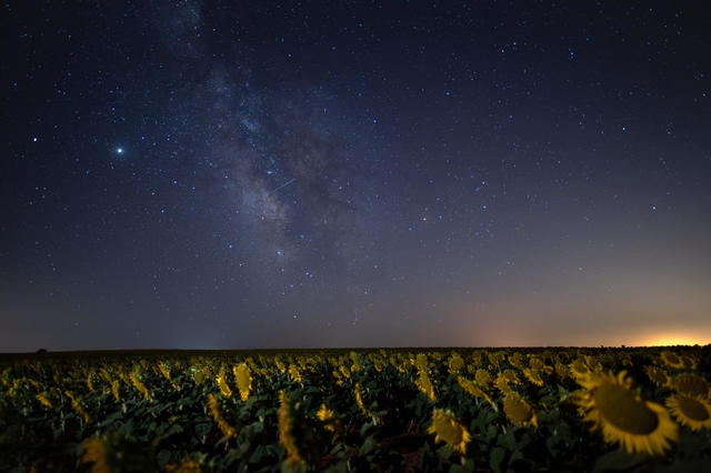 The Perseids shower over a sunflower field in Brihuega, Guadalajara, Spain.  MARCOS DEL MAZO/LIGHTROCKET VIA GETTY IMAGES