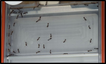 Ant farm was an experiment conducted under the supervision of Ecologist, Deborah Gordan back in 2014