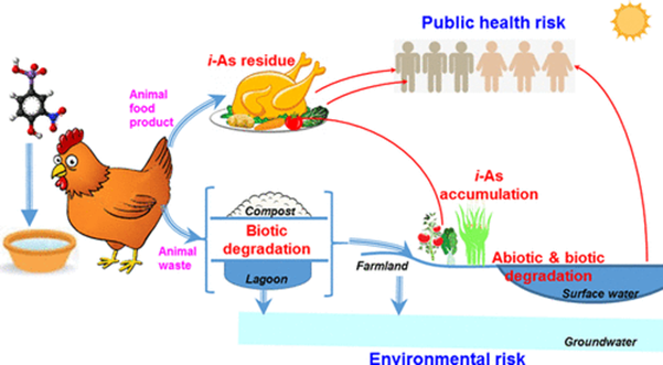 Fig.1 Visually represents the potential hazards of arsenic comprised chicken feed.11