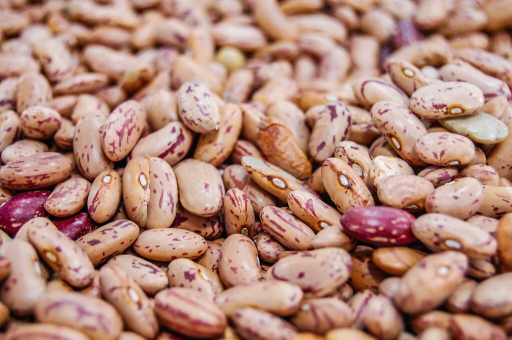 Antinutrients: Lectins are present in high amounts in beans and wheat, causing bloating and indigestion