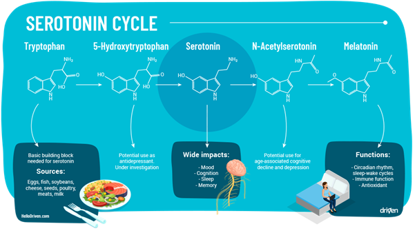 Fig.1 Summarises the chemical cycle of serotonin and it's behavioural impact on human body which will be discussed in detail in this paper.6