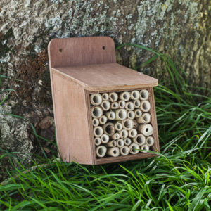 InsectBoxes_7_of_7_18ef995f-f2f6-4b92-92c1-4eb7833bba82