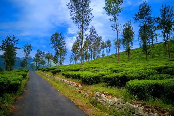 Cover-for-Monsoon-In-Wayanad