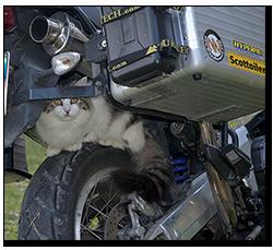 Aprilia Caponord ETV1000 Rally-Raid - puuting the 'cat' back!