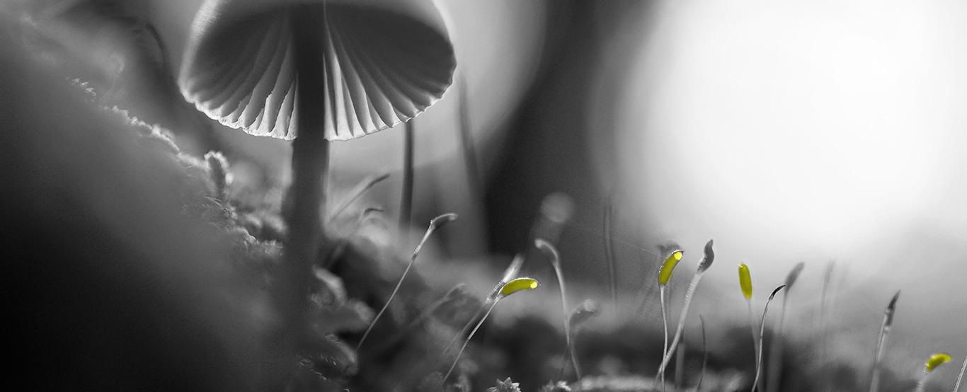 ideas mushroom