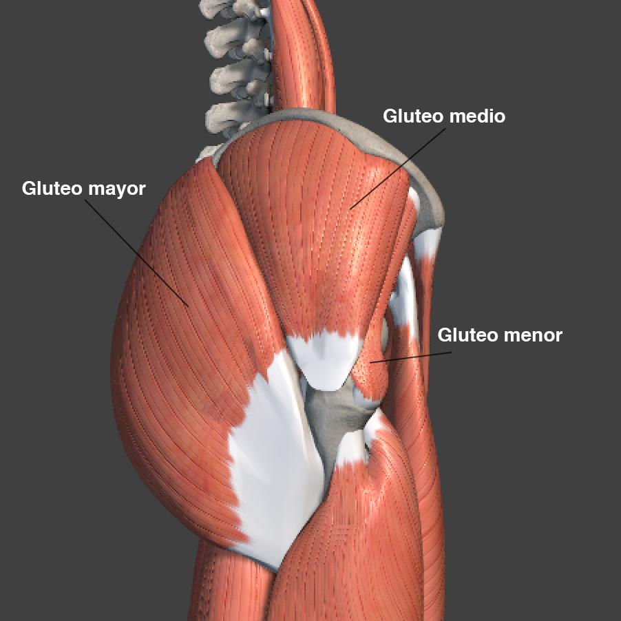 cómo darle forma a los gluteos