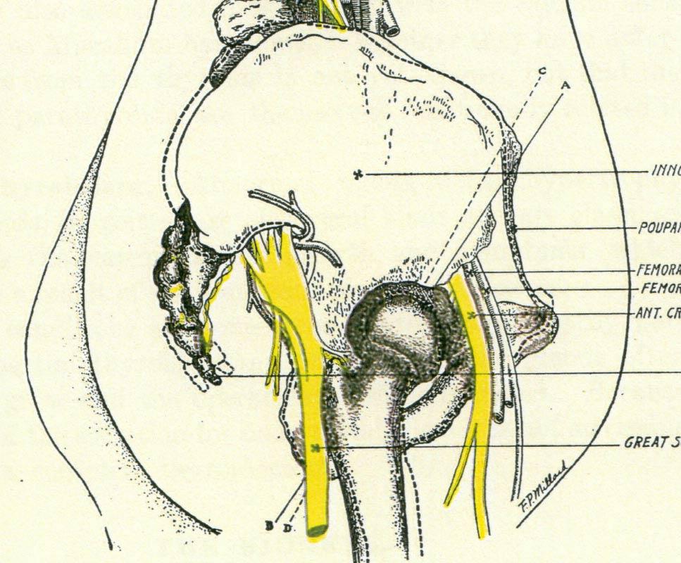 Body Framework