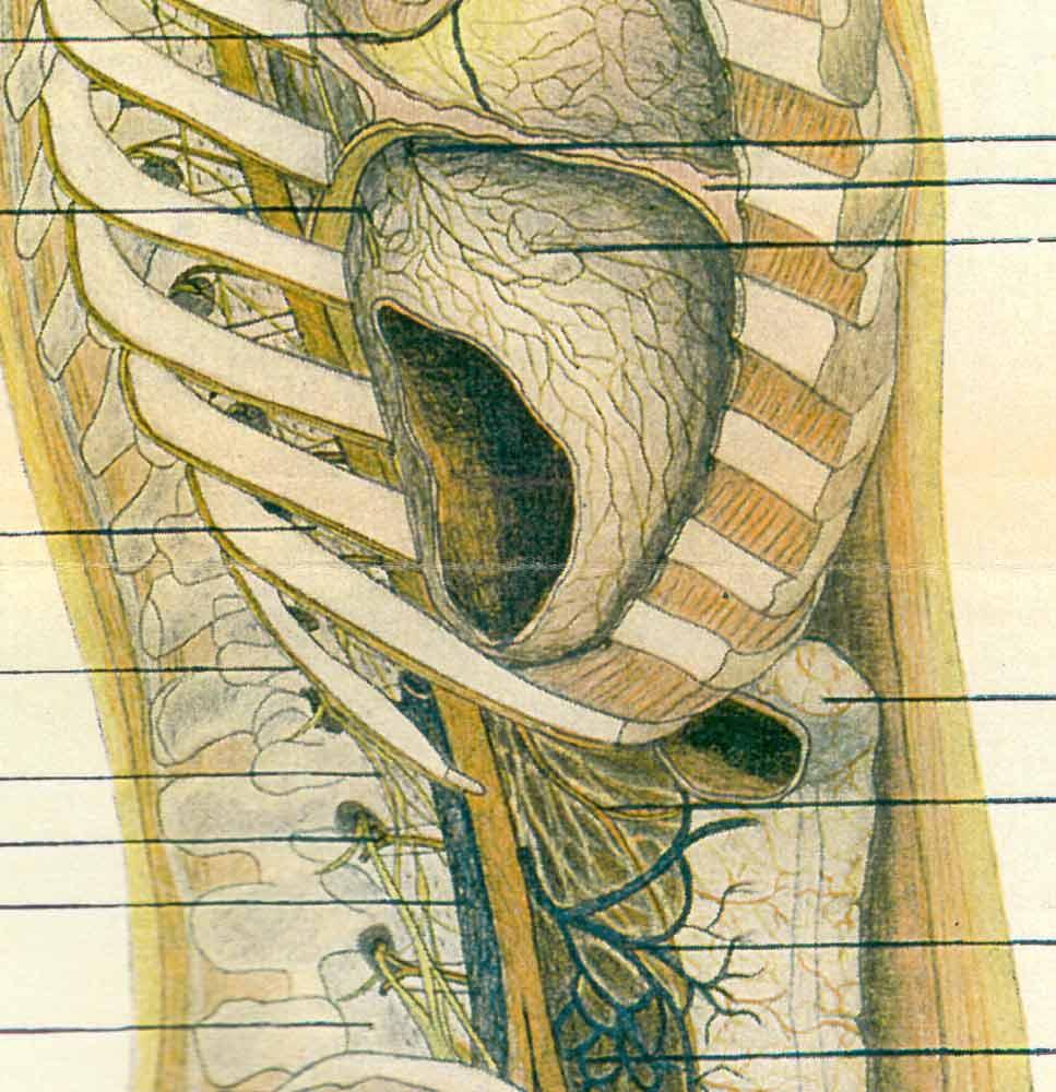 Vasomotor System