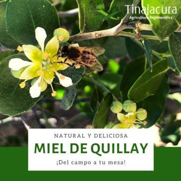 Miel de quillay