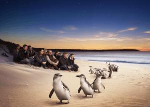 Phillip Island Touring Route