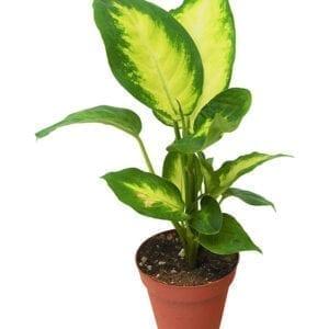 Plants in Sharjah