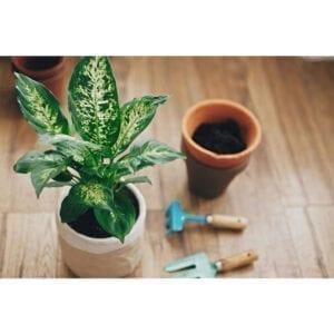 Plant Nursery in Dubai