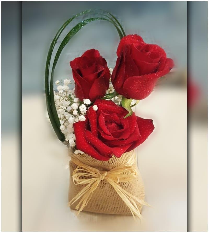 Rose Love to ajman