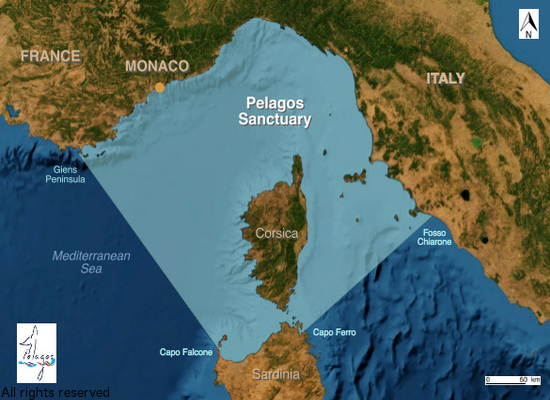 The Pelagos Sanctuary