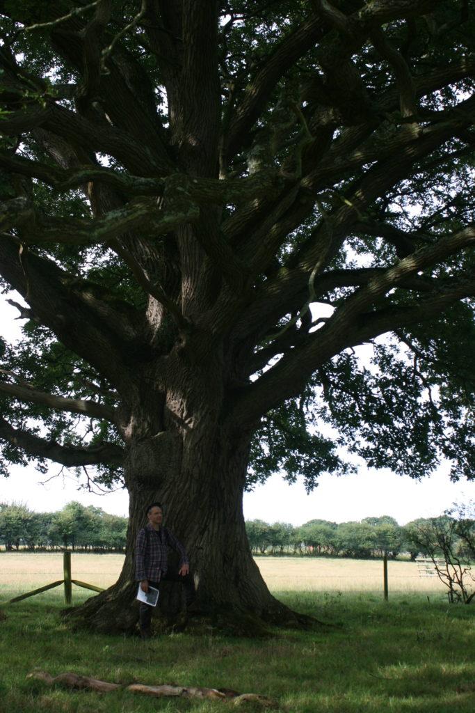 oaktreeh2