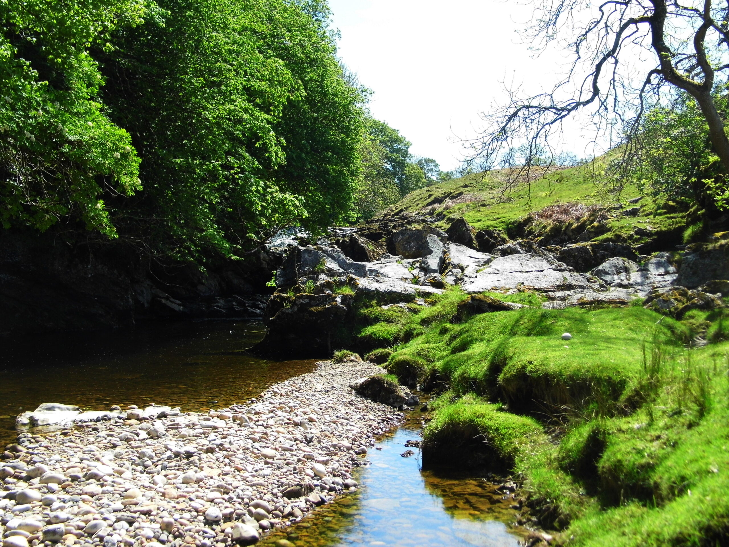 Janny Wood, Mallerstang - click for article