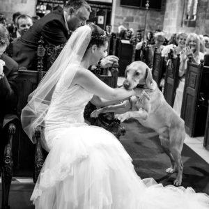 labrador dog during wedding ceremony