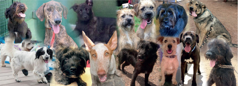 dog charity