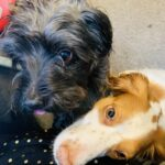 5 Reasons why you SHOULD get an Office Dog!