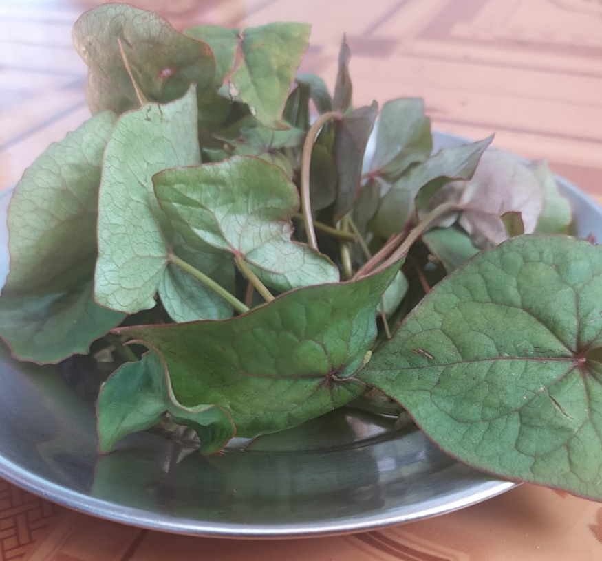 Fagopyrum dibotrys (D.Don.)Hara. – Kathu (काठू)